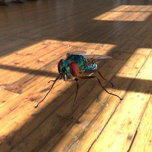 3D model fly