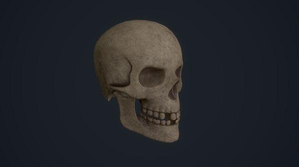 skull jawbone 3D