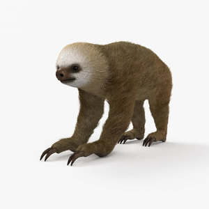 3D two-toed s sloth