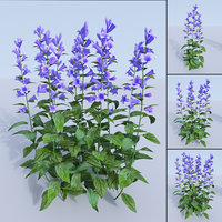 3D giant bellflower campanula latifolia