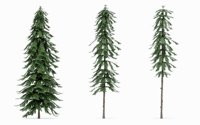 Low-Poly Pine Tree Collection