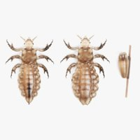 head lice set 3D model
