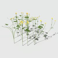 Creeping Buttercup Flower Pack