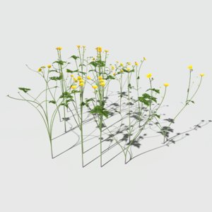 3D creeping buttercup flower pack