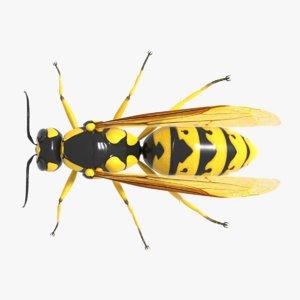 3D wasp