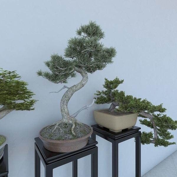 3D bonsai plant potted
