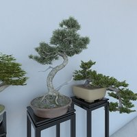 3D bonsai plant potted