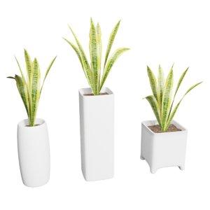 snake plant sansevieria pots 3D model