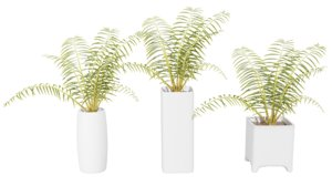 3D palm tree pots