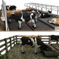 3D model cow farm 1