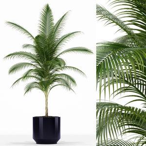 plants 158 3D model