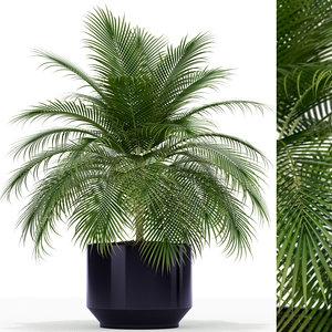 3D plants 159
