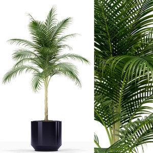 plants 160 3D model