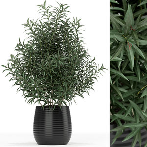 3D plants 167 model