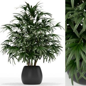 plants 170 3D model