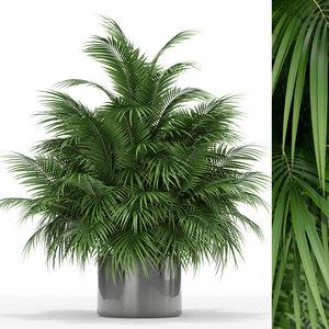 plants 177 3D model