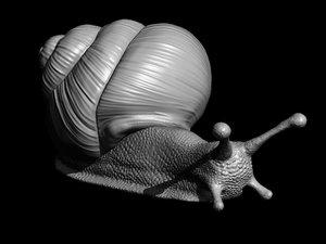 3D snail printable print