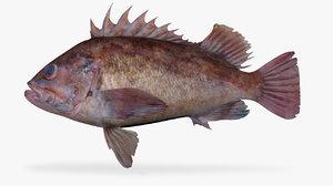 brown rockfish model