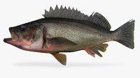 silvergray rockfish 3D model