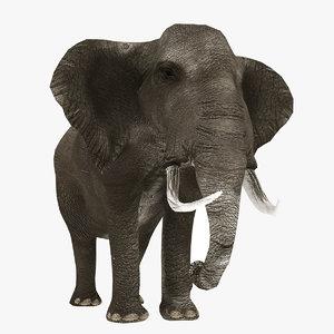 3D realistic elephant