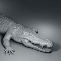 Crocodile basemesh