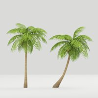 coconut tree model