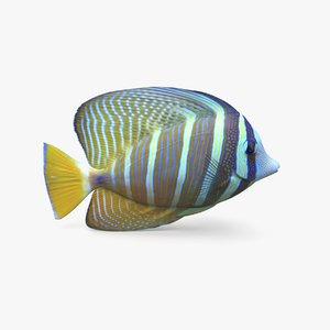 sailfin tang model