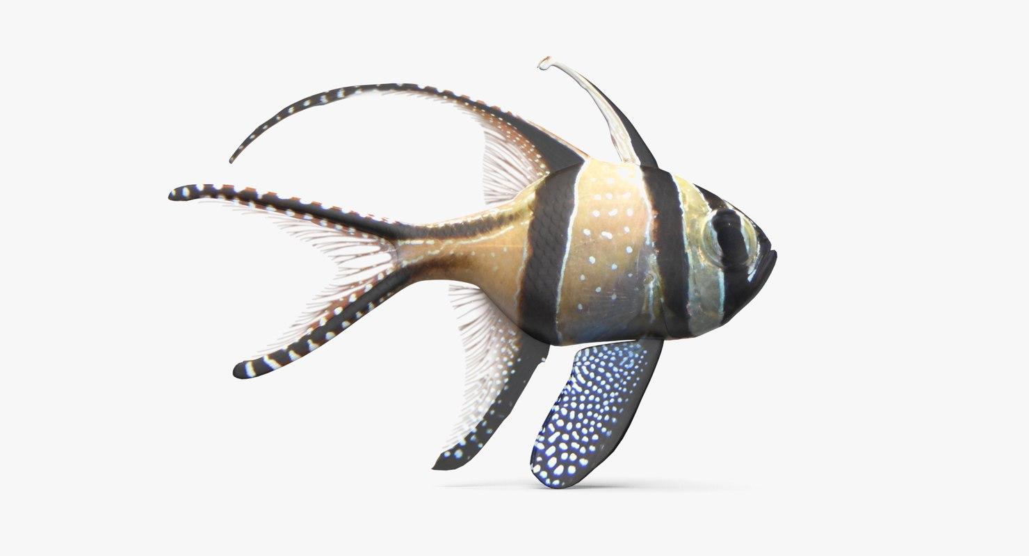 banggai cardinalfish 3D model