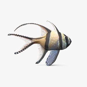 banggai cardinalfish 3D model