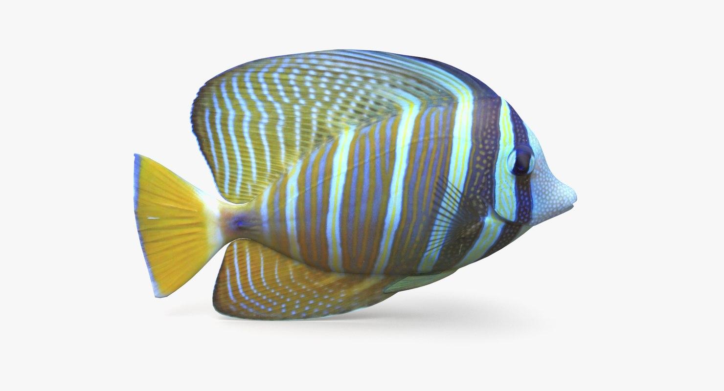 sailfin tang model