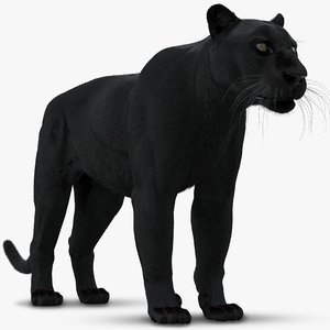 3D black panther leopard fur