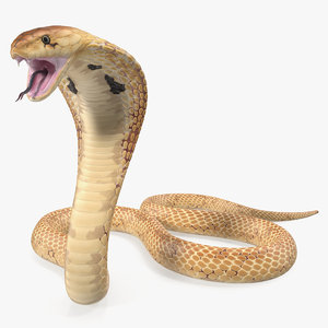 light cobra attacking pose 3D model