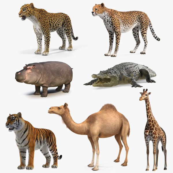 3D african animals 5 model