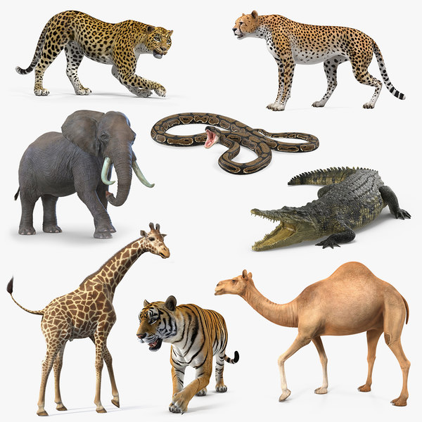 3D african animals 5 rigged model - TurboSquid 1424478