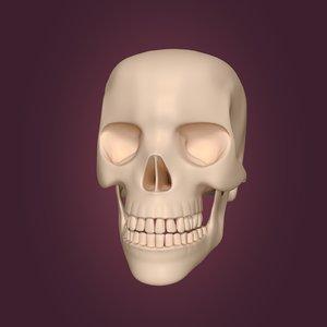 skull skul 3D