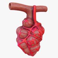 3D model lung pulmonary alveoli
