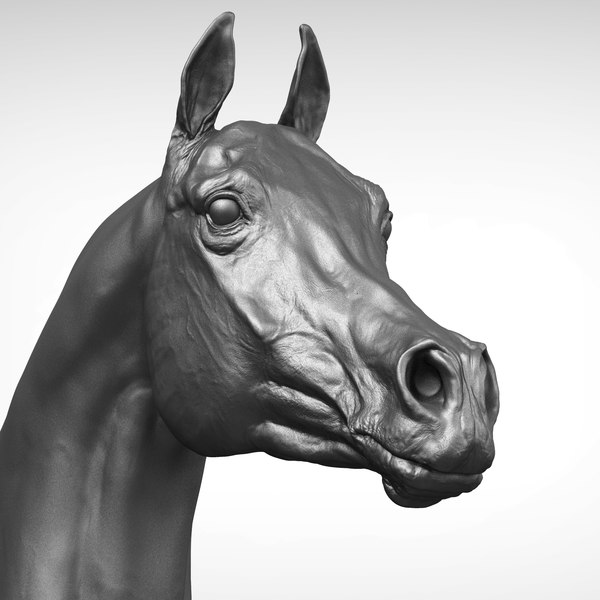 3D model arabian horse head realistic