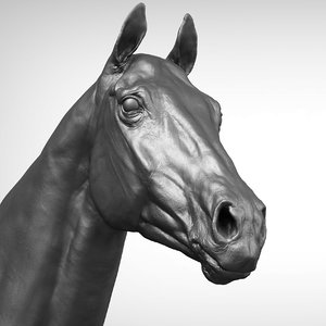 3D thoroughbred horse head realistic