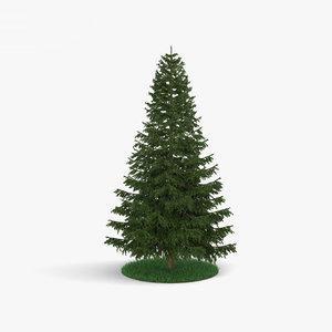 pine pinus tree 3D model