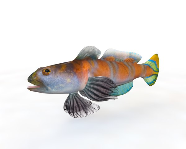 goby fish 3D