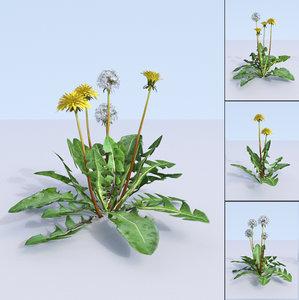 3D dandelions taraxacum planting flowers model