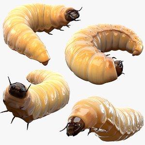 3D realistic maggot