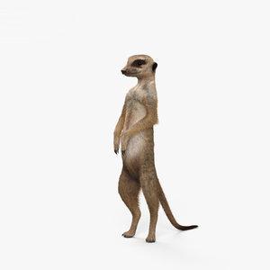 3D model meerkat hd