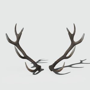 reed deer antlers 3D model