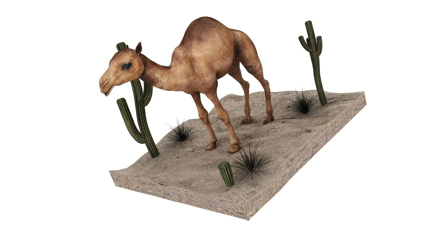 3D camel desert cactus sand