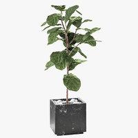 ficus lyrata plant exotic model