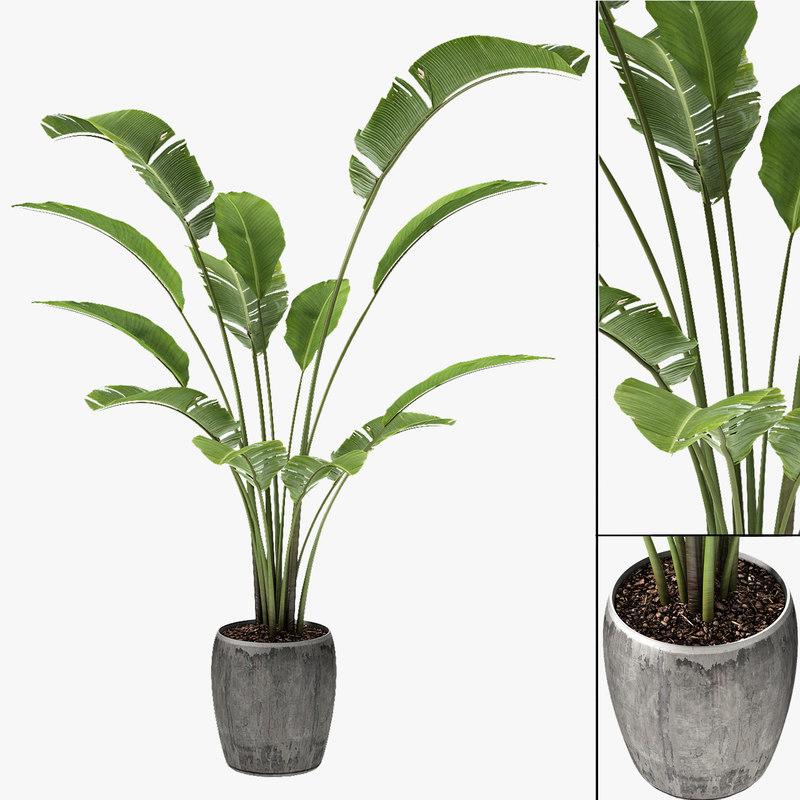 Tropical Palm Exotic Pot Plant