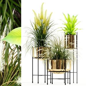 3D plants 146 agata model