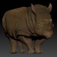 3D white rhinoceros l198 animate model