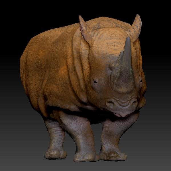 3D white rhinoceros l204 model